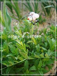 2011_0409_171251-CIMG7865 2.jpg