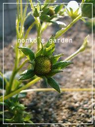 2011_0424_161412-CIMG7973 2.jpg