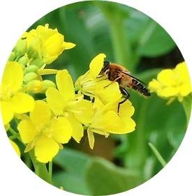 2012_0330_100901-CIMG2291-crop 2.JPG