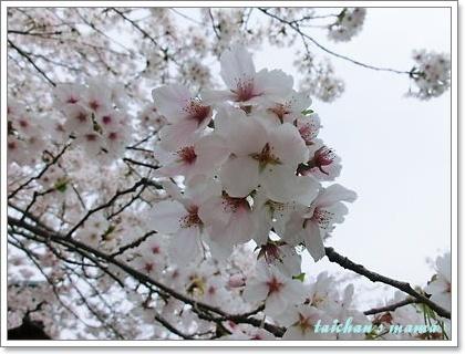 2013_0331_141408-CIMG9142 2.JPG