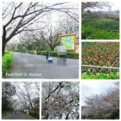お花見 1.jpg