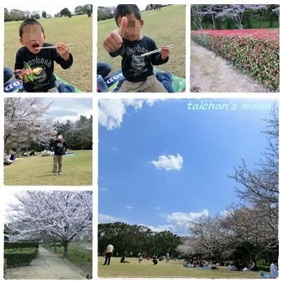 お花見 2.jpg