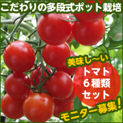 トマト.jpg