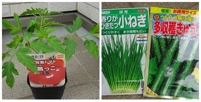 トマト&きゅうり.jpg